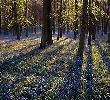 BlueBells II by redtree