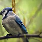 Blue Jay On A Misty Spring Day by Lois  Bryan