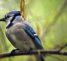 Blue Jay On A Misty Spring Day by Lois  Bryan