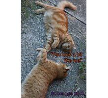Cat chat Photographic Print