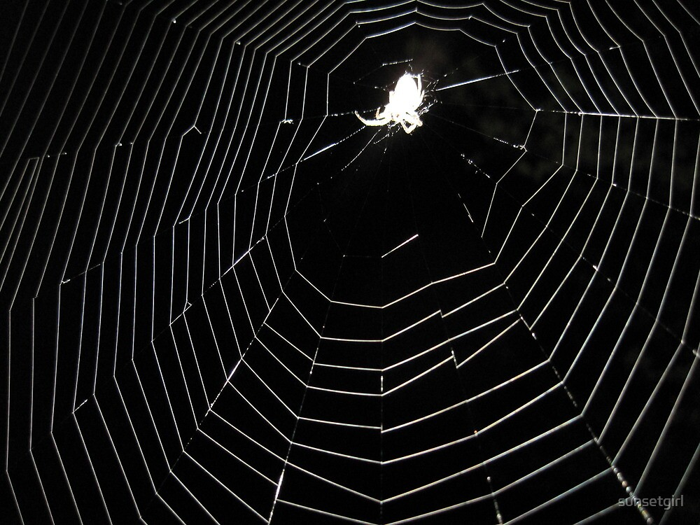Caught in a Web of Light by sunsetgirl