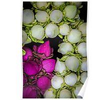 Lotus Bulbs Poster