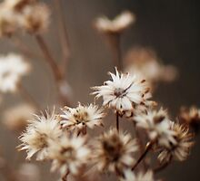 Fall Flowers by brittanypaigeph