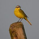Yellow Wagtail - II by Peter Wiggerman