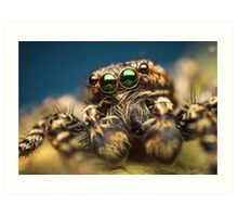 Marpissa muscosa male jumping spider high magnification photo Art Print
