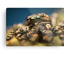 Marpissa muscosa male jumping spider high magnification photo Metal Print
