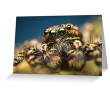 Marpissa muscosa male jumping spider high magnification photo Greeting Card