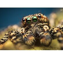 Marpissa muscosa male jumping spider high magnification photo Photographic Print