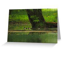 Wood Duck  (Aix sponsa) Greeting Card
