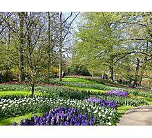 Keukenhof Park. Photographic Print