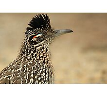 Roadrunner, Meep Meep  Photographic Print
