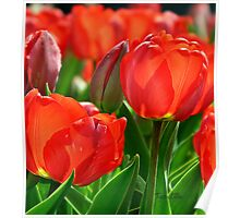 Red Tulips #2 Poster