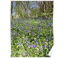 Bluebell Bank Poster
