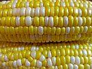 Corn by Susan S. Kline