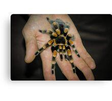 Tarantula Spider Canvas Print