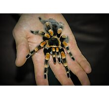Tarantula Spider Photographic Print