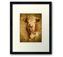 Hereford Bullock Framed Print