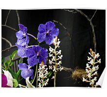 Vibrant Orchids in blazing purples Poster
