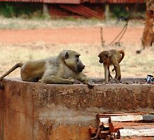 Baboon Banter by AndyEllis82