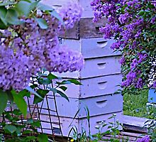 Lilacs in the Apiary at Dusk by TrendleEllwood