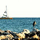 Sailboat at Point by Bill Gamblin