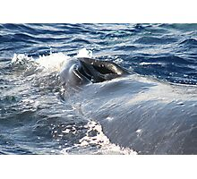 Humpback Whales In Hawaii Photographic Print