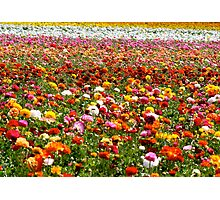 Flower FIelds Photographic Print