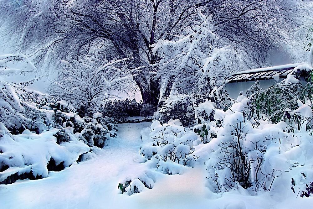 on a freshly fallen silent shroud of snow by John Poon