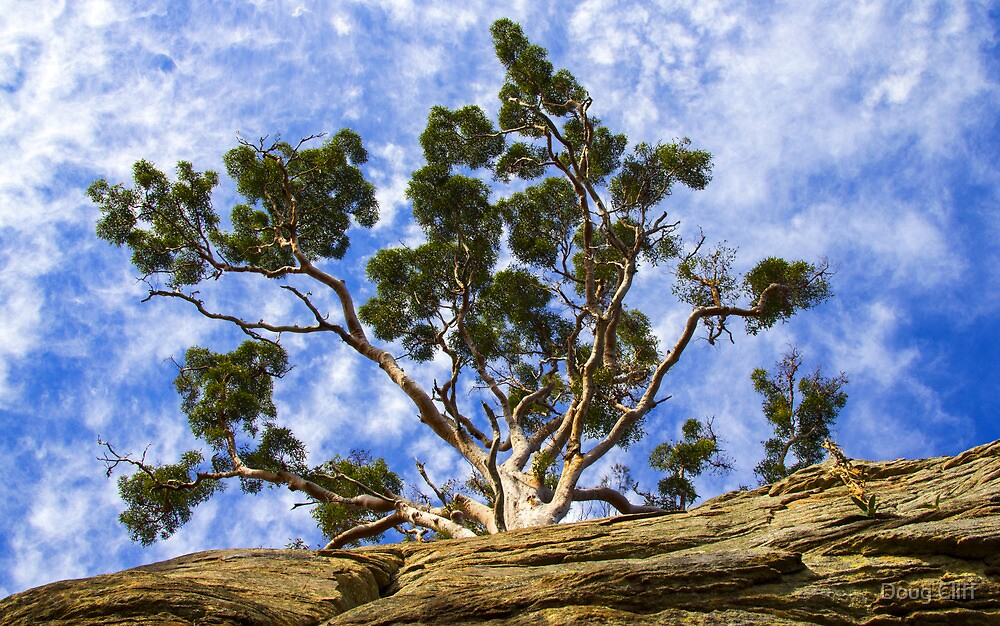 Gum Tree by Doug Cliff