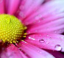 Flower by Justinlrg78