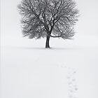 Solitude Footprints by redtree