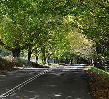 The Avenue, Mt Wilson by Chris  Randall