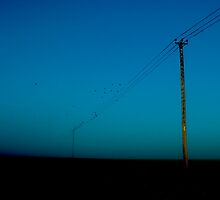 Birds on a wire by redtree