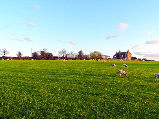 Field by CreatedPhoto
