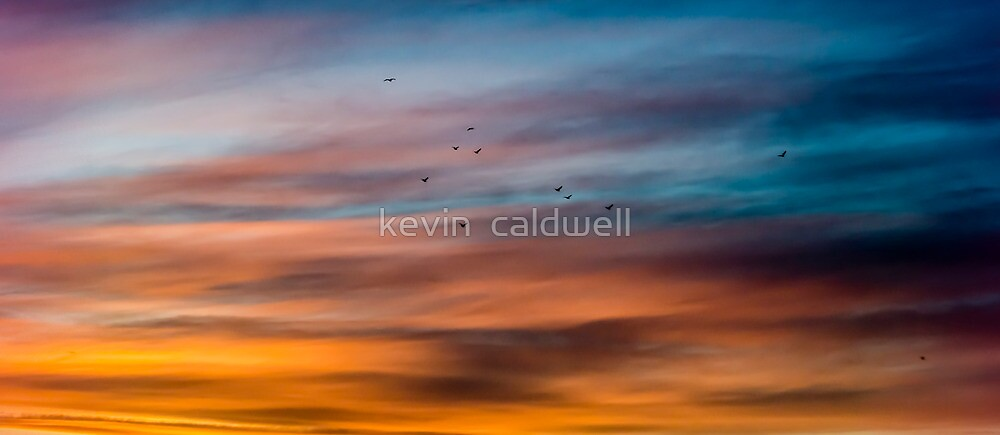 birds at dusk by kevin  caldwell