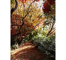 The autumn maple walk Photographic Print