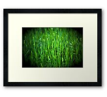 Lavender Buds Framed Print