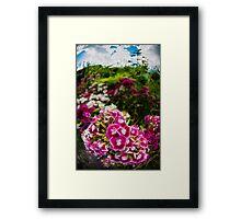 Pink Dianthus Flowers Framed Print