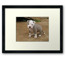 Holli At Home Framed Print
