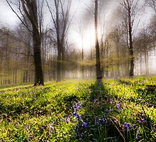 Bluebell Woodland by Ian Hufton
