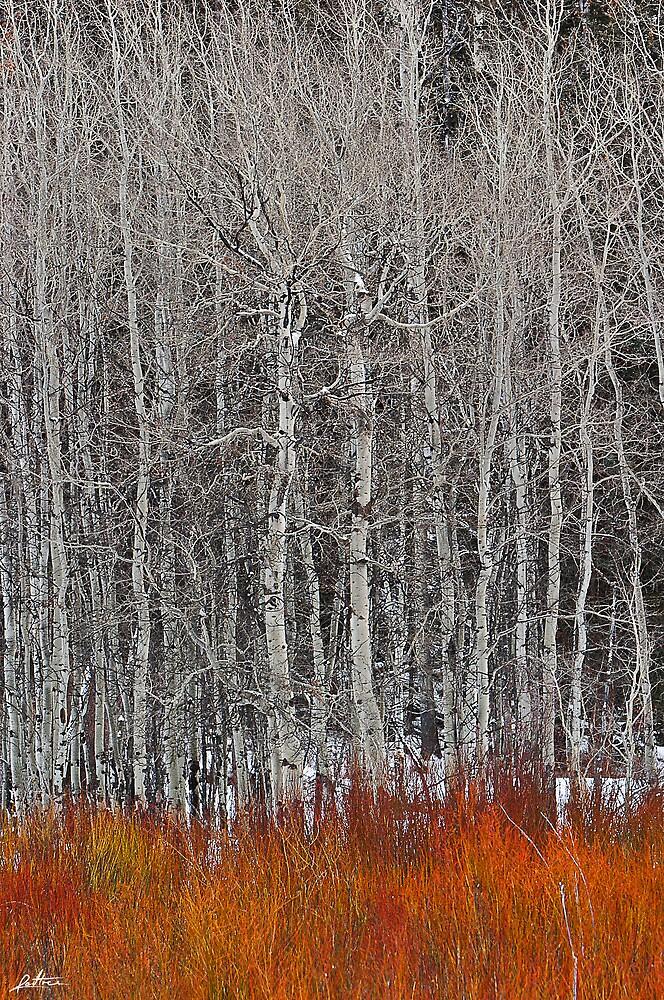 Winter Fire by redtree