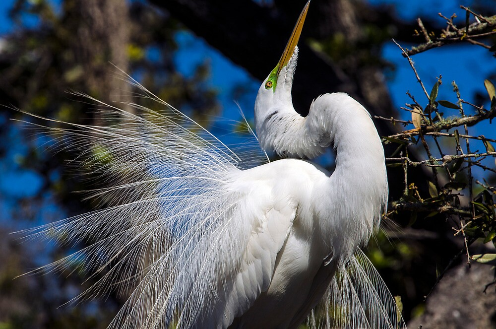 Courtship by Barry Goble