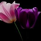 PINK AND PURPLE TULIPS by RoseMarie747