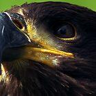 Eagle by KarenJI1962