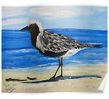 Grey Plover on the Gulf Coast of Florida Poster