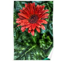 HDR - Red Flower Poster