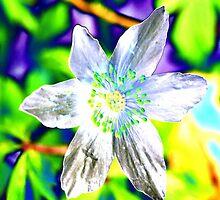 Acid flower by Paulmayfield