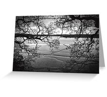 Twisted Tree River View Greeting Card
