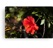 Flowers of Hawaii Canvas Print