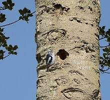 Home Sweet Home for this Woodpecker. by albutross